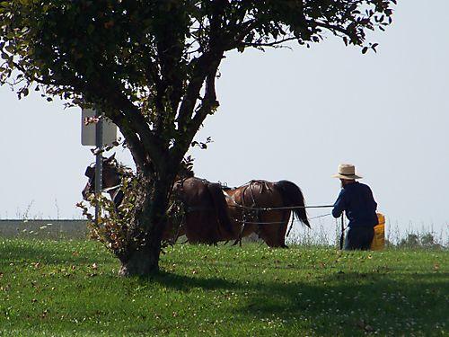 Amish dude