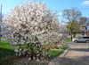 Spring_at_the_crib